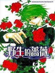 野生的蔷薇